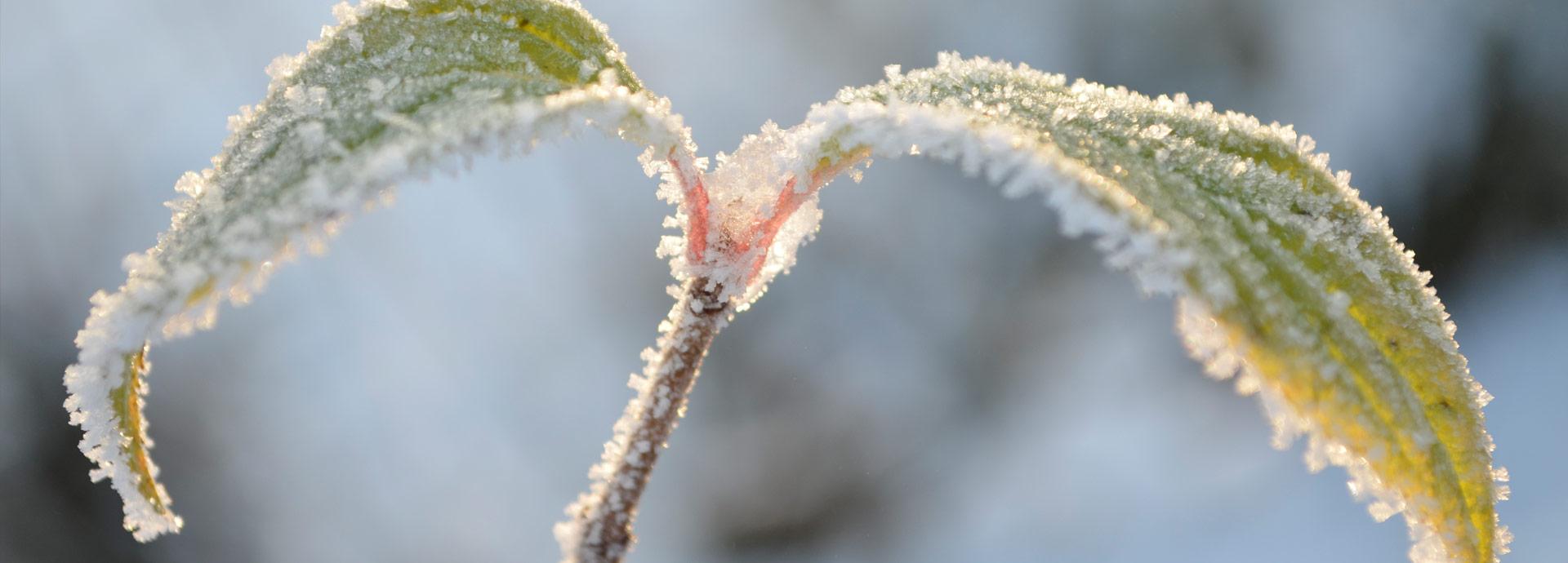 2 Winter