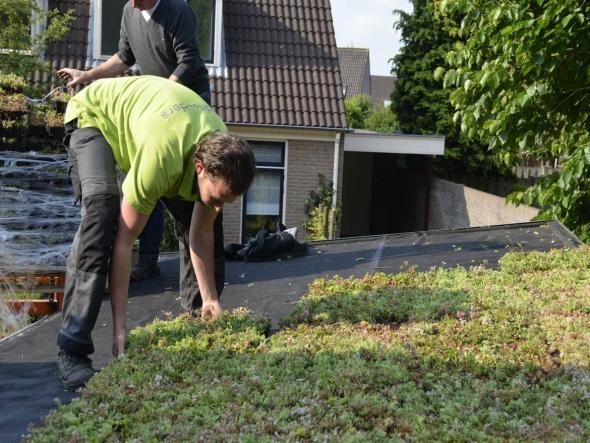 Subsidie voor groene daken